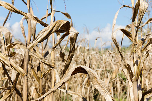 Article image for Farmers calling for change to drought declaration policy