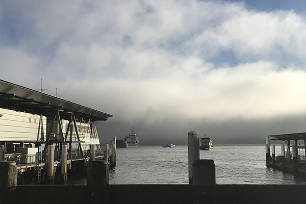 Sydney fog: Ferries and flights cancelled