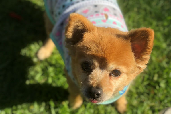 Article image for Pet of the week: Mitzi