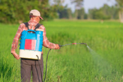Safety of Chemical in Weed Killer