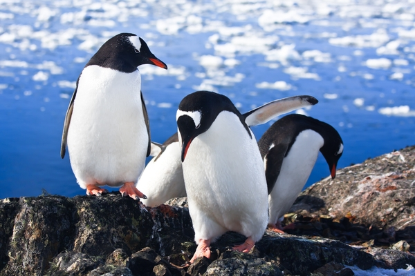 Article image for Enjoy the wildlife of Antarctica