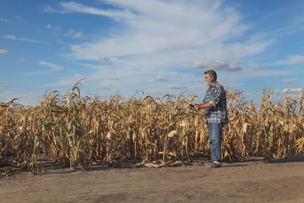 Article image for 'We'd save a lot of people': Robbie Katter calls for rural development bank to help drought-ravaged farmers