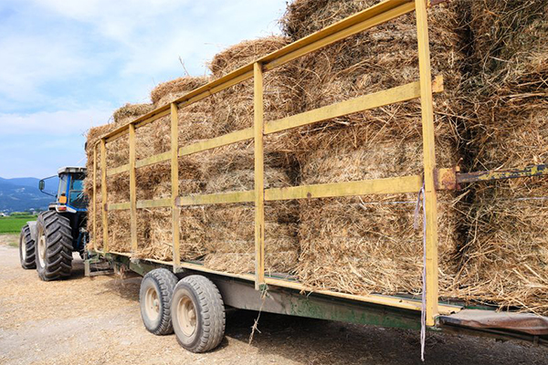 Article image for Hay shortage puts squeeze on already struggling farmers