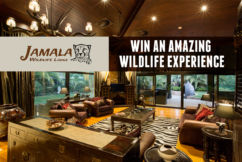 Win an amazing Wildlife Experience