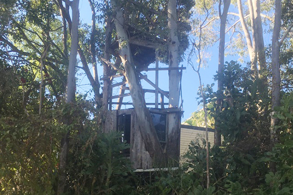 Article image for Family fight to save beloved treehouse from energy provider