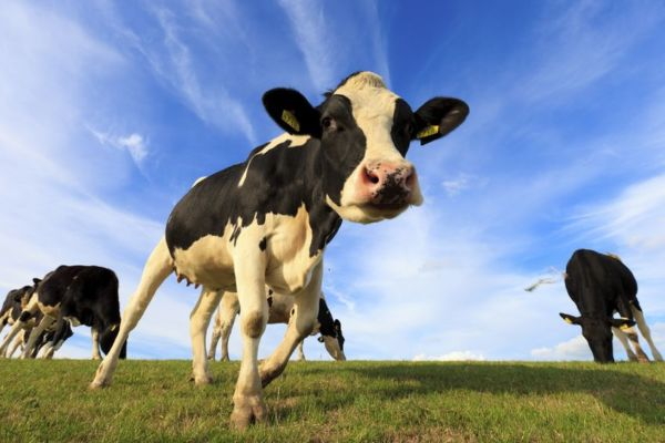Article image for 'You could land yourself in court': Dairy processors on notice over milk price claims