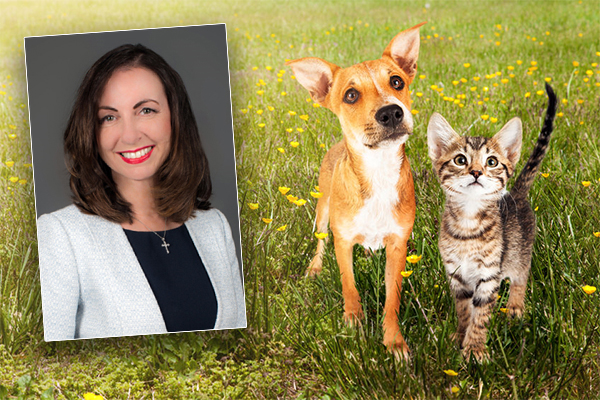 Article image for Residents told how many pets they're allowed to own