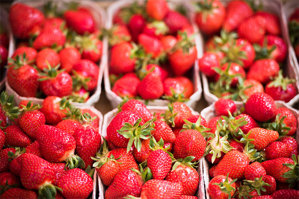 Article image for 'It's devastating': Strawberry farmers question their future as contamination crisis worsens