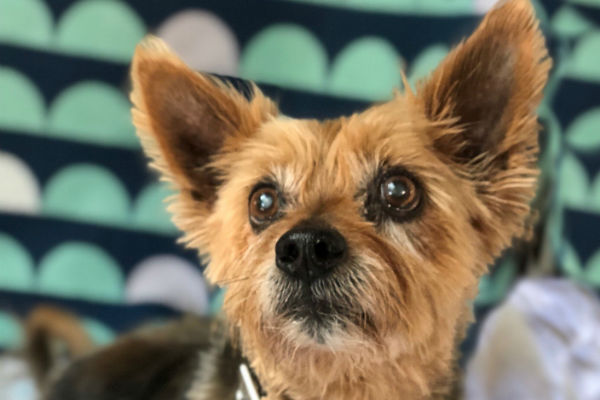 Article image for Pet of the week: Dennis