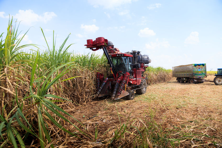 Article image for 'They've done nothing, nada, zip': Keith Pitt on QLD Government's refusal to help sugarcane farmers