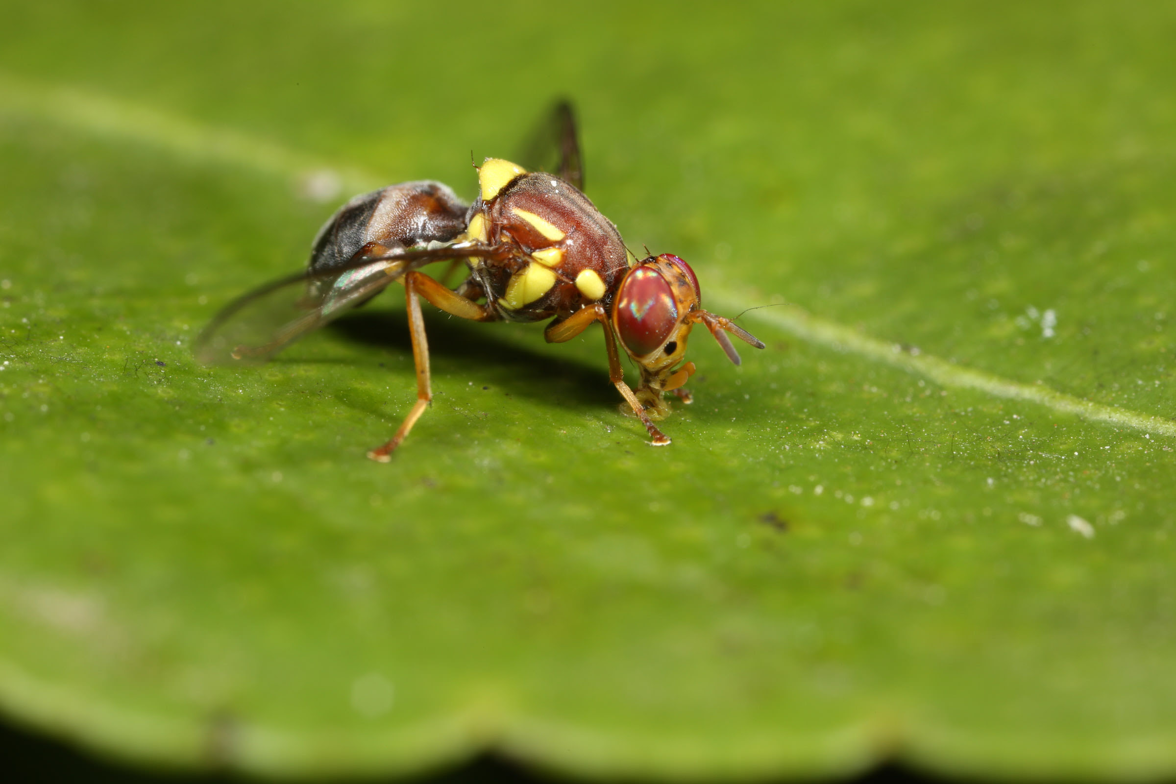 New technology in pest insect fight