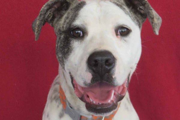 Article image for Pet of the week: Junior