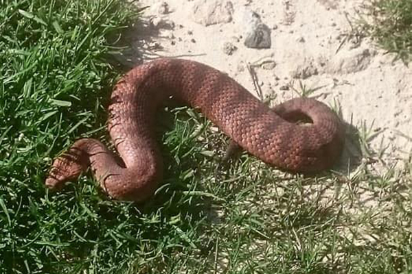 The snake season is upon us: What to do if you see one