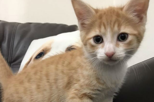 Article image for Pet of the week: Crumpet
