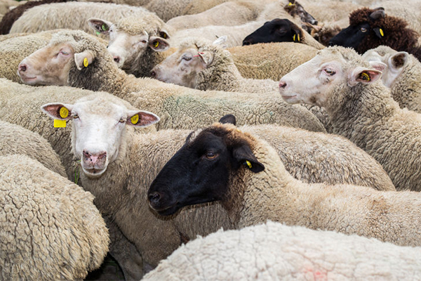 Article image for Damning live export review prompts major overhaul