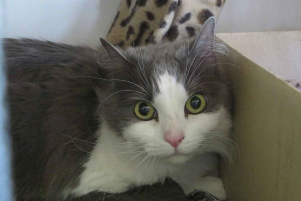 Article image for Pet of the week: Gracie