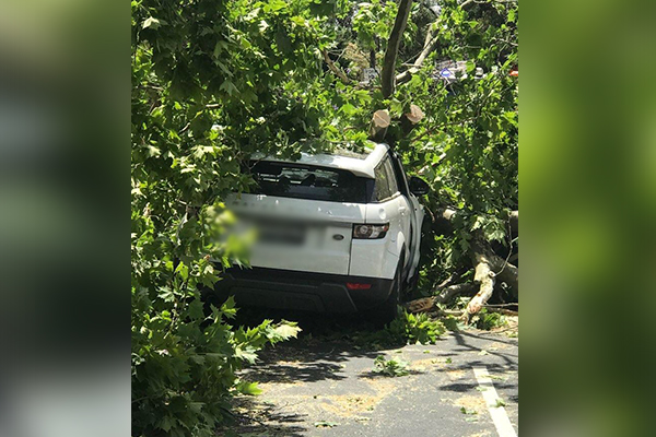 Man lucky to be alive after tree crushes his car