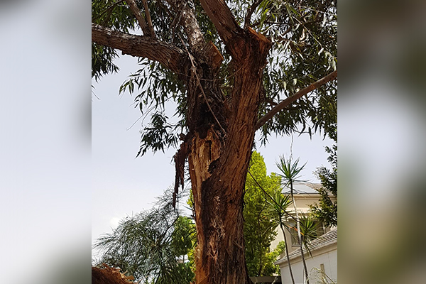 falling tree brad 4