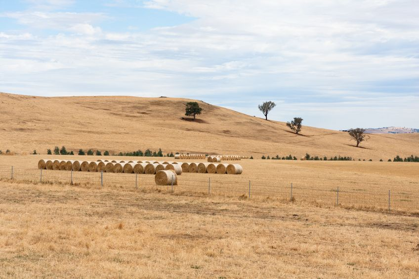 Farm production value falls, but remains above average