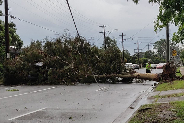 Article image for 20,000 homes still without power as storms savage Sydney