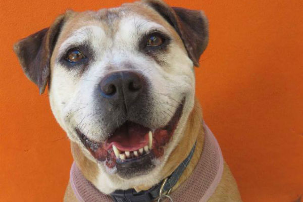 Article image for Pet of the week: Brandy