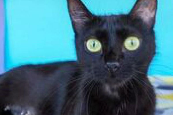 Article image for Pet of the week: Lolli
