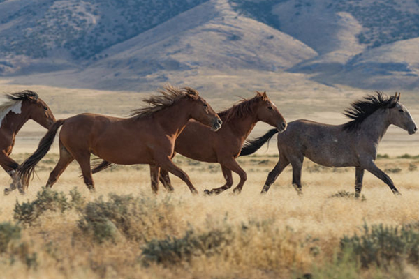 Community given 'no consultation' on aerial brumby culling