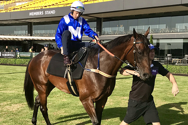 Article image for She's back! Chris Waller chats following Winx's return to the track
