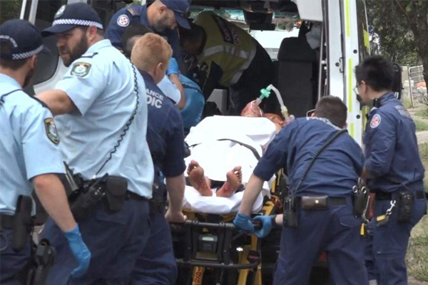 Man fighting for life after being attacked by dogs, Tregear