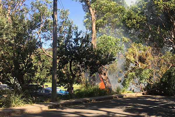 Balmoral fire: Fallen tree pulls down power lines, sparks electrical fire