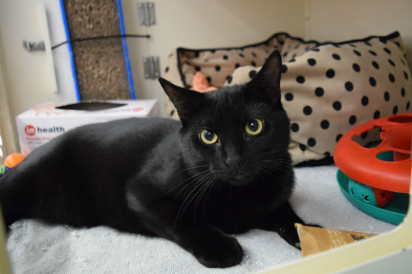 Article image for Pet of the week: Marshall