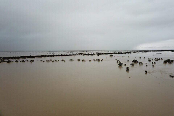 Article image for Scott Morrison focused on floods not polls, despite major boost