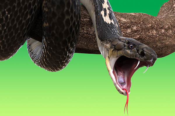 Article image for You can name a snake after your ex for Valentine's Day