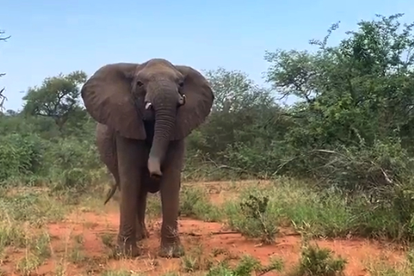 Article image for WATCH | Aussie reality TV crew caught in elephant stampede