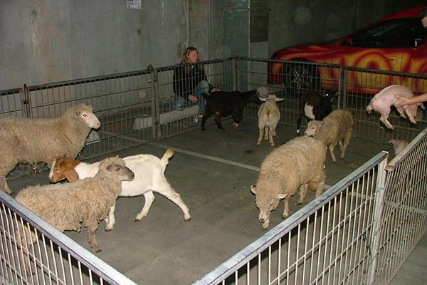 Nova animal farm