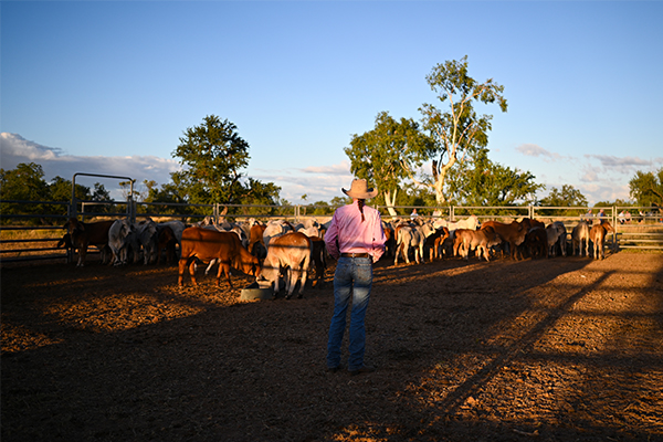 Article image for 'Meteoric rise' in drought support for farmers