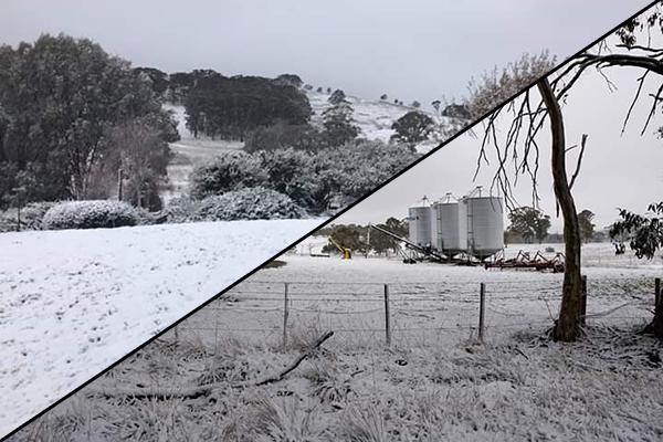 Article image for NSW Central West blanketed in snow