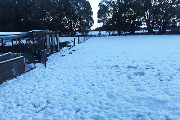 'Beautiful white wonderland': Snow blankets the Southern Tablelands
