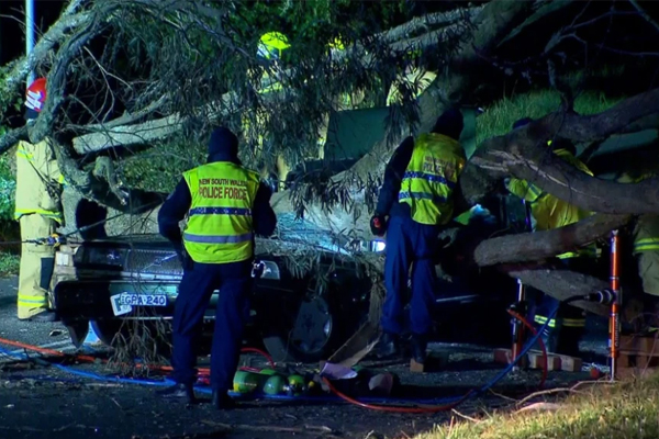 'A very sad day': Paramedic killed after car crushed by falling tree, Katoomba