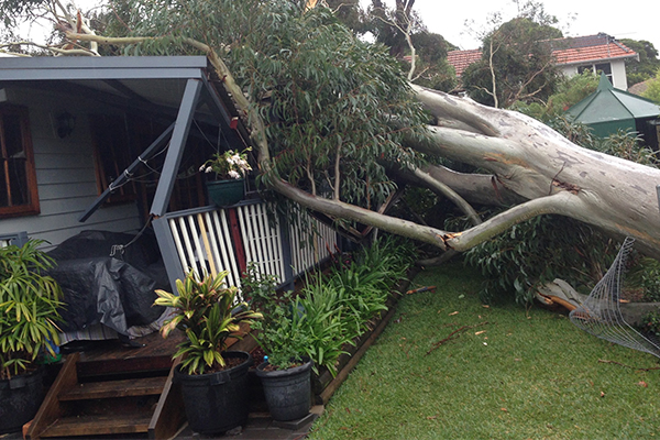 'Healthy' tree falls on Sydney home