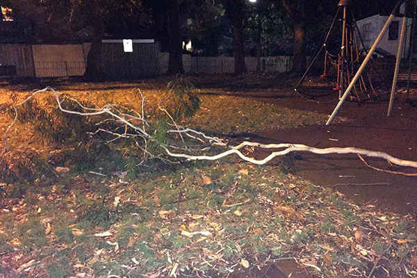 Council refuses to cut down tree threatening lives of children