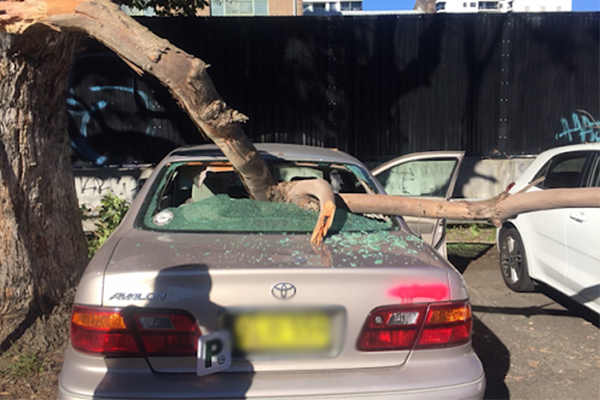 Article image for Tree smashes car window