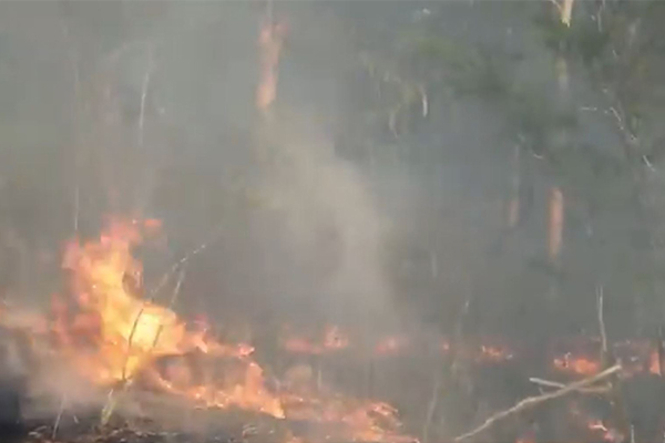 Bushfire closes the M1 motorway, causing massive delays