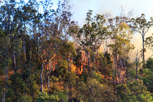 Tough new penalties for bushfire arsonists