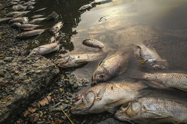 Noah's Ark style plan to solve upcoming fish Armageddon