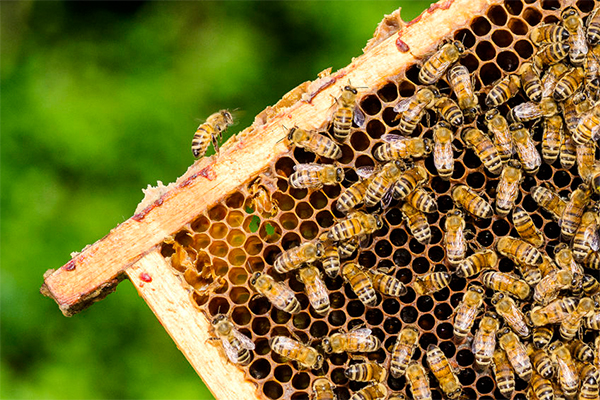 Article image for The sting of drought: Honey and almond production drying up