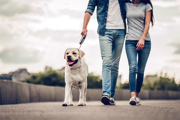 Article image for Dog owners facing huge fines for failing to walk their pets
