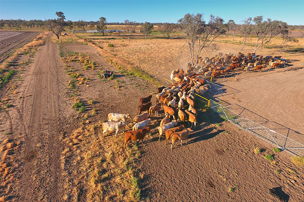 Article image for Playing politics with drought: Regional areas fed up with 'us and them nonsense'