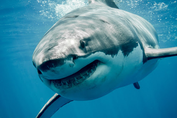 Article image for Shark attack in the Whitsundays leaves two people with serious injuries