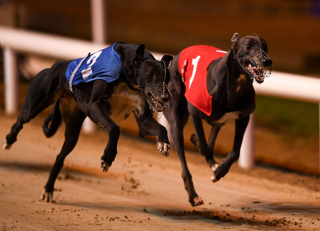Greyhound NSW fighting to keep Dapto Dogs track open